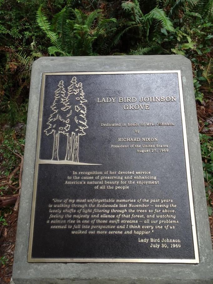 Redwoods10